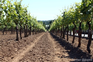 Domaine de Chaberton: Vineyards
