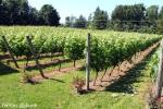 Township 7: Vineyards