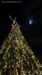 Big Christmas Tree at the Market