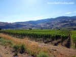 Endless rows of vines along Black Sage Road