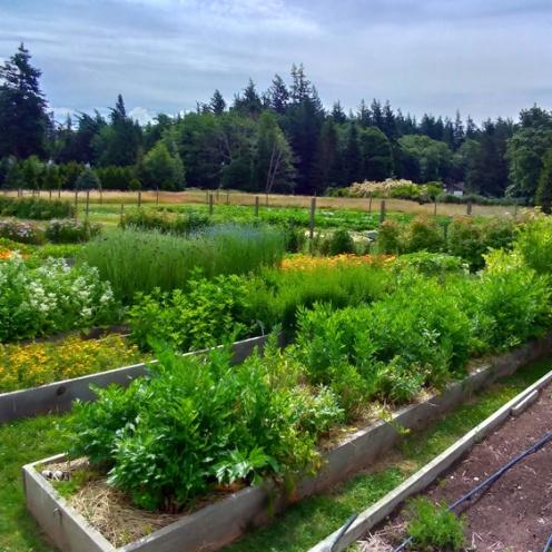 Loganita Farm 02