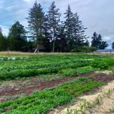 Loganita Farm 03